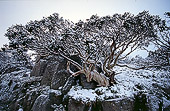 Snow Tree in Snow
